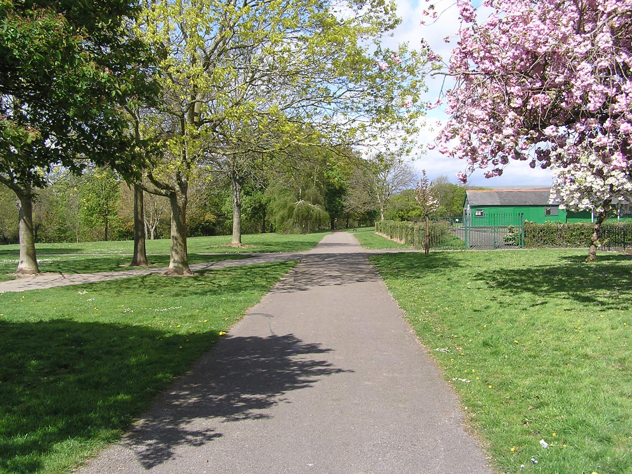 Spring blossom in Llandaff North