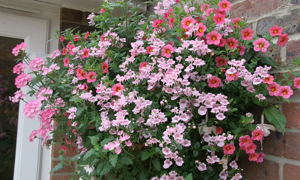Pink hanging basket