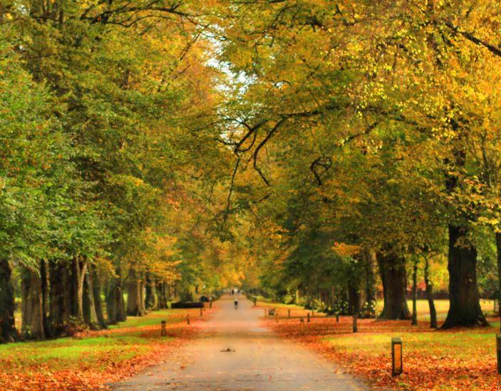 Cardiff autumn